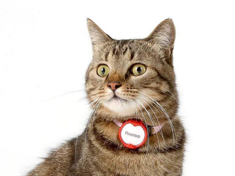 【 Pawbo iPuggyGo 寵物智慧釦 】常見問題 - 購買前篇
